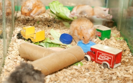 Build-Hamster-Toys-out-of-Household-Items-Step-6