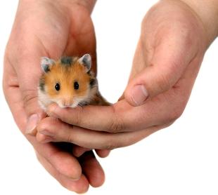 HamsterT2Pic3