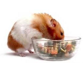 hamster-eating11.11