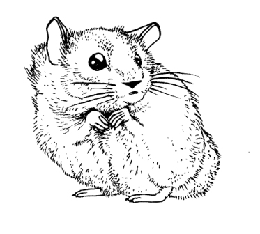 hamster_coloring_pages