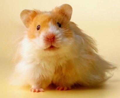 hamsters-0